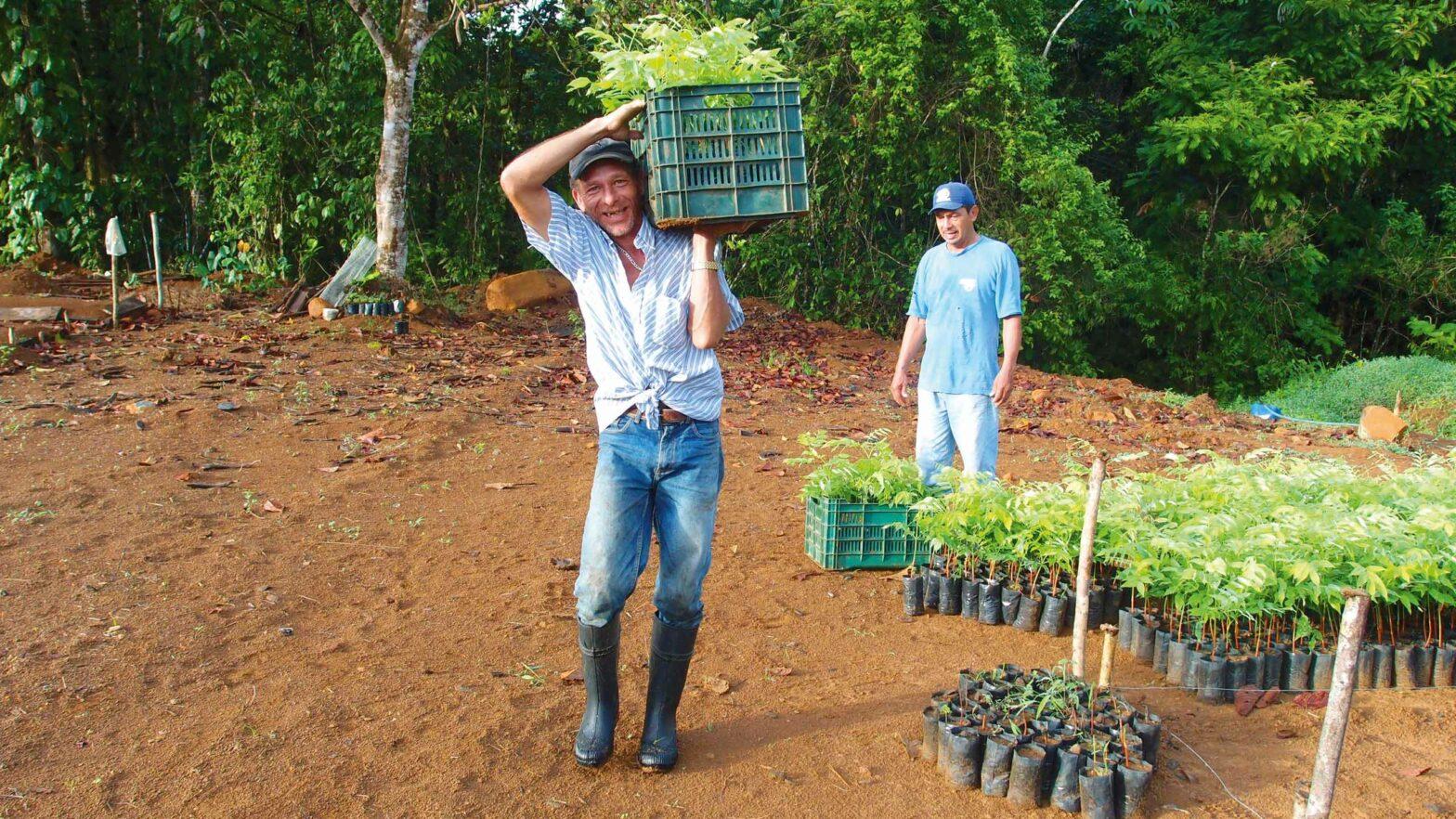 Arbeiter beim Bäume pflanzen