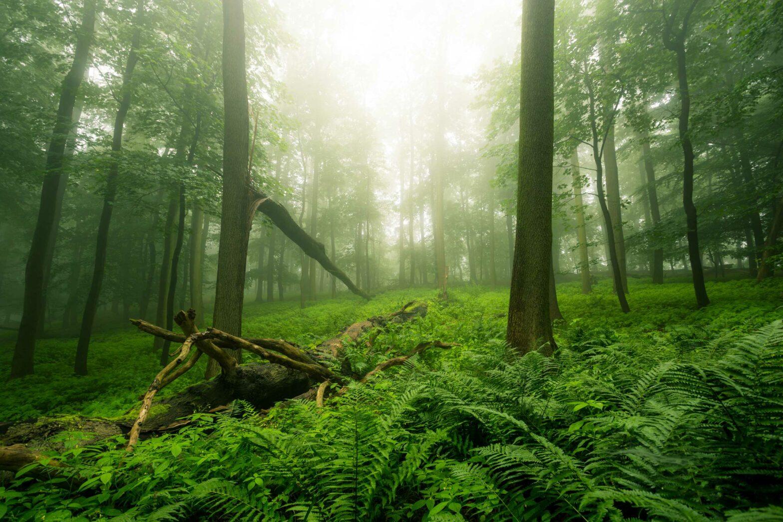 Mischwald Waldimpression